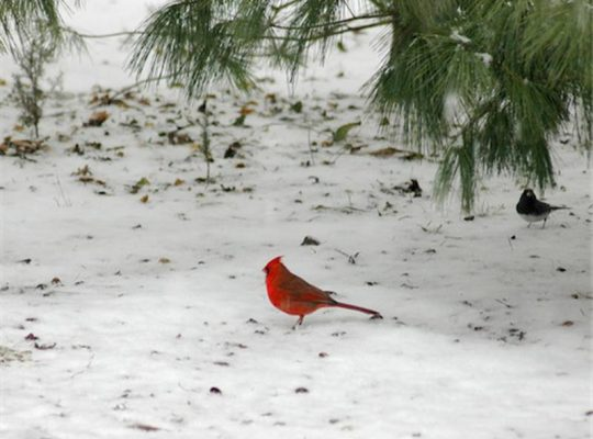 Calendar: The Great Backyard Bird Count